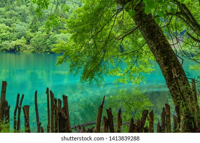 Jiuzhaigou lake and forest trees, jiuzhaigou is a famous natural scenic spot in China.There are thick forests and vegetation.There are also distinctive lakes, mostly surrounded by mountains