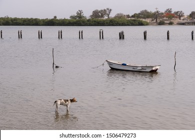 Joal, Senegal - june 27, 2019: Landscape with dog and canoes in the waters surrounding Fadiouth Island