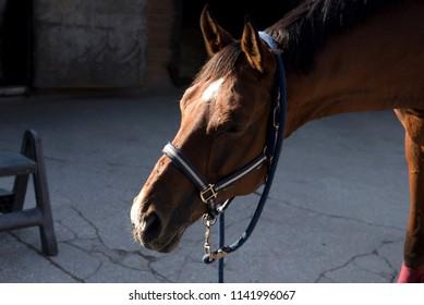 jockey riding a horse outdoors