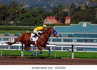 Jockey takes thoroughbred race horse down the home stretch.