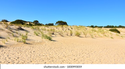 Jockey's Ridge State Park, North Carolina - Shutterstock ID 1830993059