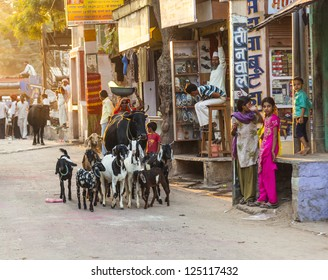 JODHPUR, INDA - OCT 24: woman with ox and her goats pass the old bazaar street on OCT 24, 2012 in early morning to get a day job in Jodhpur, India.