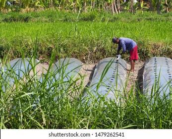 Jogja / Indonesia - August 15 2019: Indonesian farmer (petani) in a rice field starting the farming season