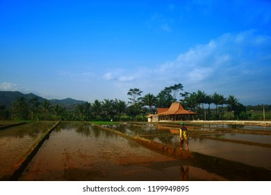 Joglo, traditional building in the middle of rice fields, Nanggulan, Yogyakarta