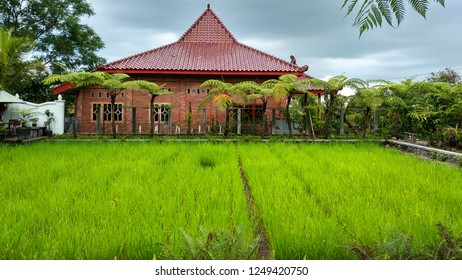 Joglo is a traditional Javanese house in Indonesia. The surrounding landscape is equipped with green trees and rice plants