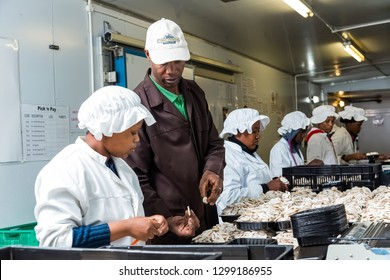 Johannesburg, South Africa - March 03 2-14: Inside a Commercial Mushroom Farm and packaging facility