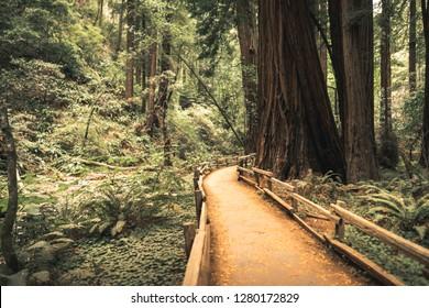 John Muir Woods Trail