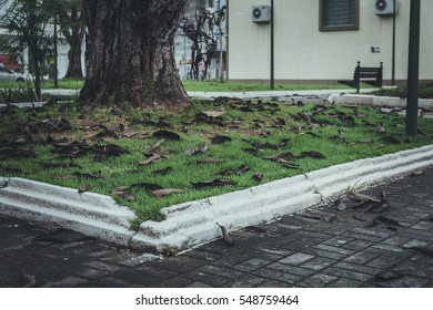 JOINVILLE, SANTA CATARINA, BRAZIL - DECEMBER 2016: Large flowerbed with tree
