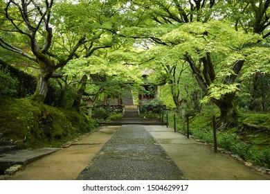 Jojakkoji temple (Jojakko-ji) in summer season. Kyoto, Japan.