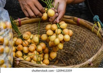 Jojoba fruits sold in the Luang Prabang morning market in Laos