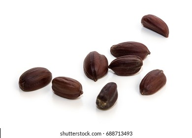 Jojoba seeds. Simmondsia Chinensis.