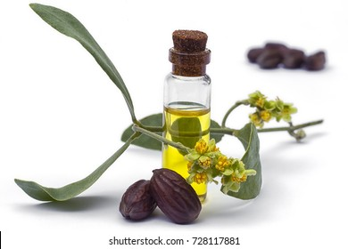 Jojoba (Simmondsia chinensis)oil, leaves, flower and seeds isolated on withe background