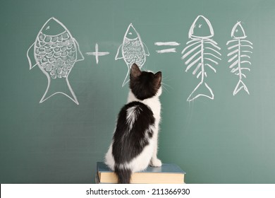 Joke about a cat studying arithmetic