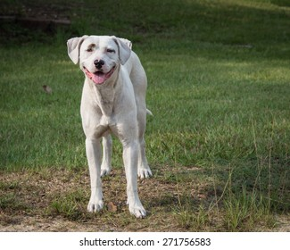 Joker the Dog. Smiling, happy dog in a patch of grass looking at the viewer.