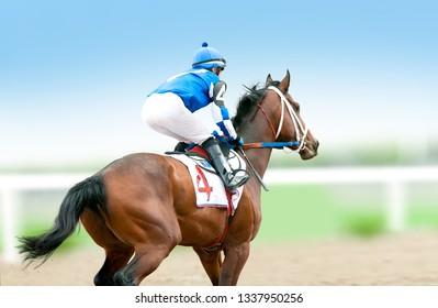 jokey on a racing horse runs to finish