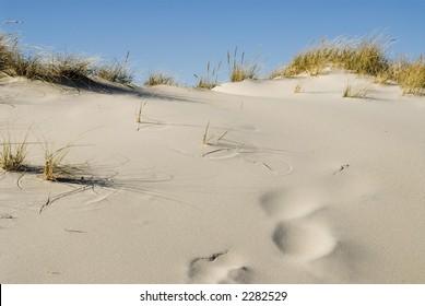 Jones Beach Sand Dune, room for copy/text