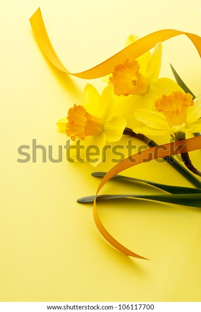 jonquil flower and ribbon on yellow background