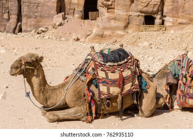 Jordan Middle East November 2017, Colorful Camels in waiting at the Rose City.