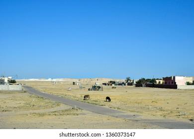 Jordan, rural scene with donkeys on dry pasture