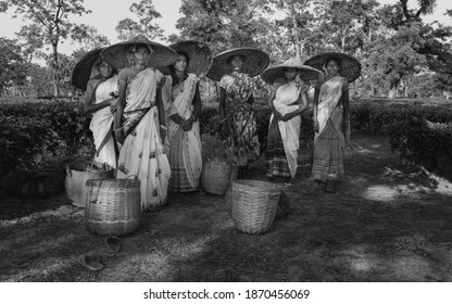 JORHAT, INDIA - AUGUST 30, 2011: Group of women tea leaf pickers wearing large bamboo hats and traditional clothes at end of working day on August 30, 2011 in Jorhat, Assam, India.