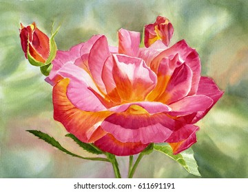 Joseph's Coat Rose with pale background. watercolor painting of a yellow and red rose on a pale green background hand painted