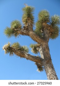Joshua tree against a blue sky in southern California