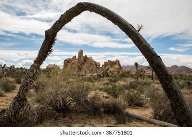 Joshua Tree Arch