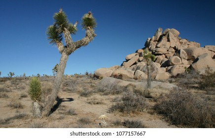 Joshua Tree And Boulder Pile