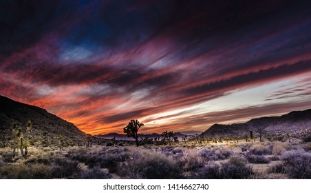 Joshua tree, CA/ San Bernardino county-4/20/2016: Joshua Tree National Park Sunset