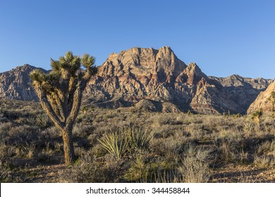 Joshua tree and mountain peaks at Red Rock Canyon National Conservation Area near Las Vegas, Nevada.