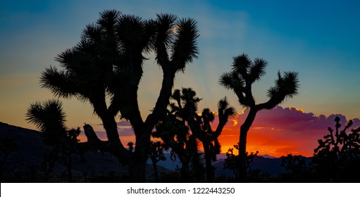 Joshua Tree National Park in California, USA