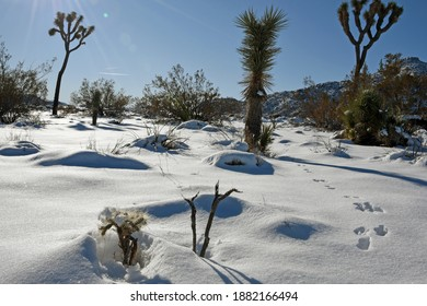 Joshua Tree National Park in California in snow and sunshine