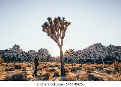 Joshua Tree National Park Golden colors at sunset blue sky people with big joshua tree