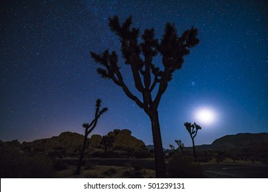 Joshua tree national park at night with star,California,usa.