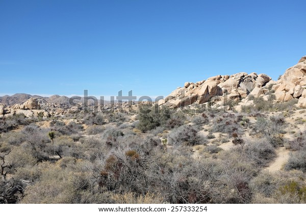 Joshua Tree National Park Snow Capped Stock Image Download Now