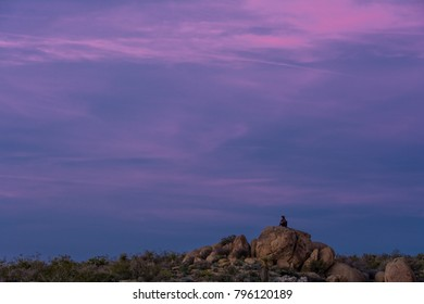 A Joshua Tree National Park visitor observes the last light from one of the granite boulders that are found in the park.