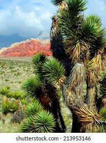 Joshua Tree Red Rock Canyon NV