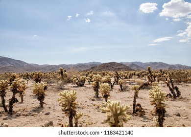 Joshua tree. Yucca valley. Beautiful landscape in a joshua tree national park