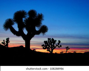 Joshua Trees silhouetted, Joshua Tree National Park, Palm Springs, California