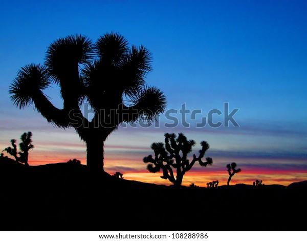 Joshua Trees silhouetted, Joshua Tree National Park, Palm Springs, California
