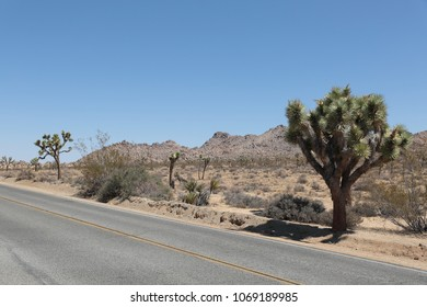 Joshua Trees in Joshua Tree National Park, USA road trip vacation with a beautiful view to landscape to rest after touristic road trip. Boulder area with stone walls