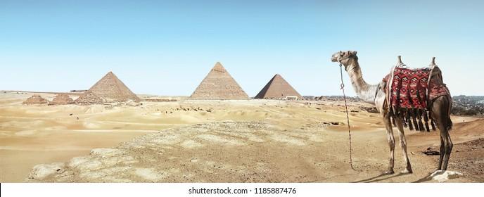Journey in cairo