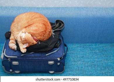 Journey concept. Nice domestic ginger cat sleeping on suitcase