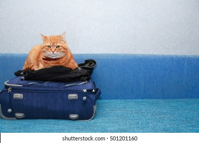 Journey concept. Nice domestic ginger cat on suitcase