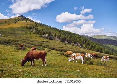 Journey on foot through the mountain valleys. The beauty of wildlife. Altai, the road to Shavlinsky lakes. Hike