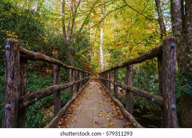 Joyce Kilmer Memorial Joyce Kilmer Memorial Forest, Appalachian Mountains, North Carolina