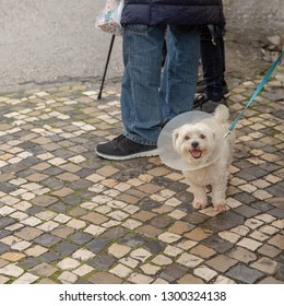 Joyful little white dog wearing in medical Elizabethan collar, on a city street at the feet of the owner.