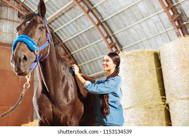 Joyful occupation. Beautiful professional horsewoman enjoying her occupation while cleaning dark horse