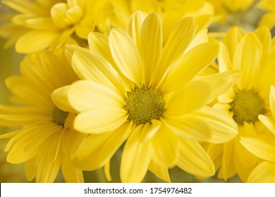 joyful, Sunny, happy background of many yellow daisies close-up