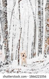 Joyka in the snow landscape in Western Pennsylvania